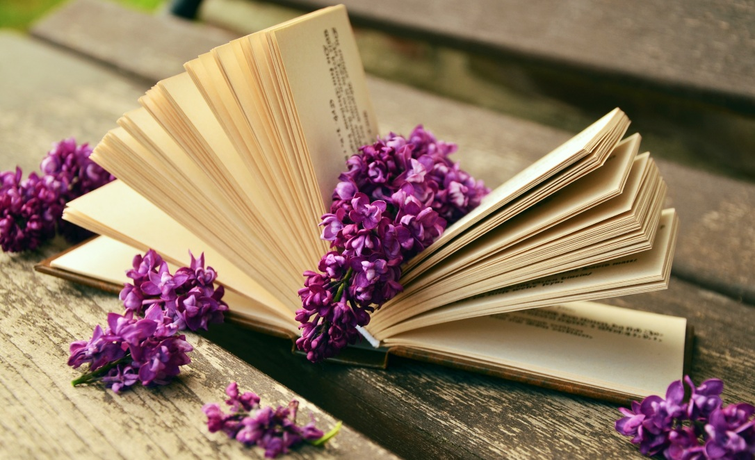 book-read-open-flower-purple-petal-731732-pxhere.com.jpg